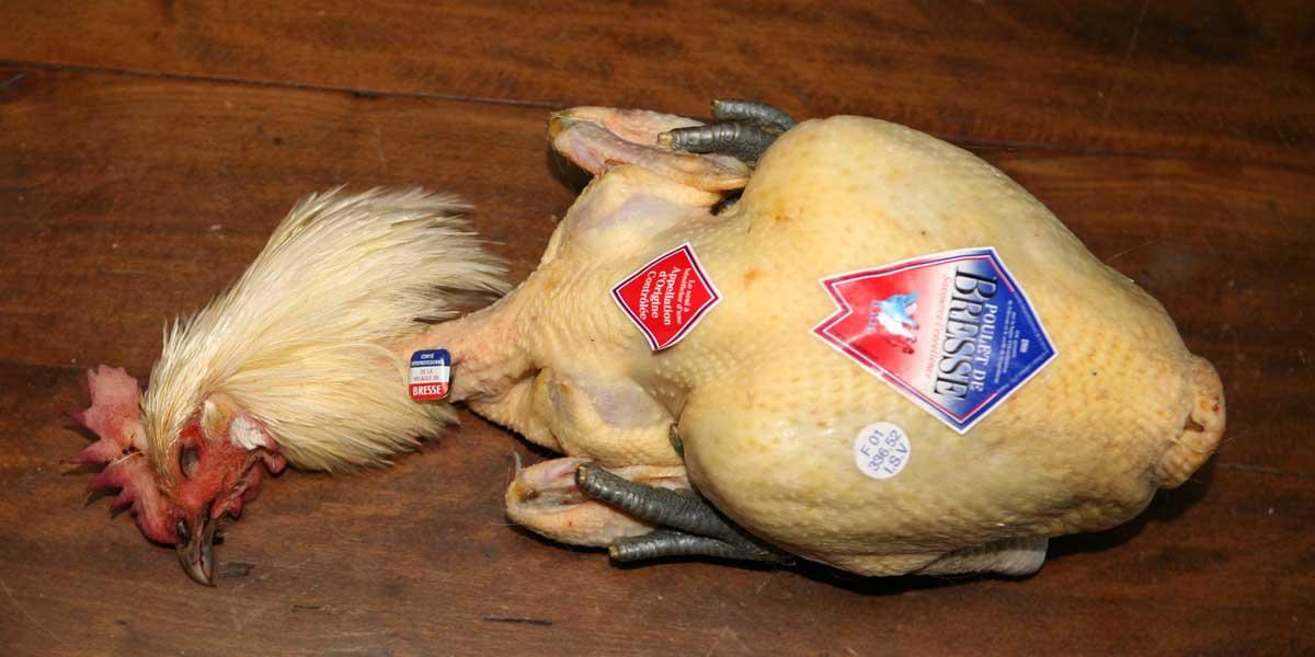 Vente de poulet de Bresse AOP du domaine de la Pérouse